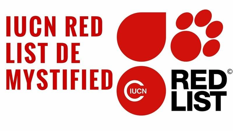 Sách đỏ là gì và những thông tin cần biết về sách đỏ 13
